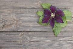 Flores de la clemátide púrpura en fondo de madera Imagenes de archivo