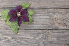 Flores de la clemátide púrpura en fondo de madera Foto de archivo