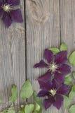 Flores de la clemátide púrpura en fondo de madera Imagen de archivo libre de regalías
