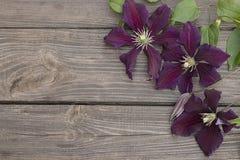 Flores de la clemátide púrpura en fondo de madera Fotografía de archivo libre de regalías