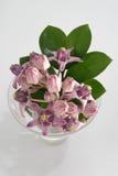 Flores de la corona Imagen de archivo
