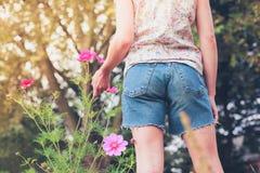 Flores de la cosecha de la mujer joven en prado Imagen de archivo