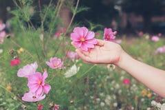 Flores de la cosecha de la mujer joven en prado Fotografía de archivo