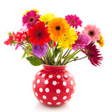Flores de la dalia y de Gerber Fotografía de archivo libre de regalías