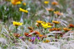 Flores de la duna Fotos de archivo