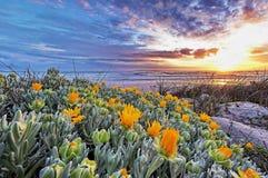 Flores de la duna fotos de archivo libres de regalías