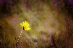 Flores de la duna Imágenes de archivo libres de regalías