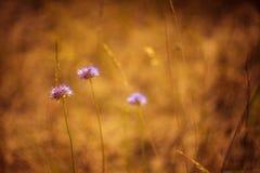 Flores de la duna Foto de archivo
