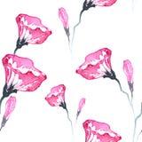 Flores de la enredadera Imagen de archivo libre de regalías