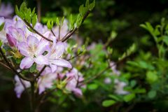 Flores de la fiesta de jardín en la oscuridad fotografía de archivo