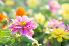 Flores de la flora en jardín Foto de archivo libre de regalías