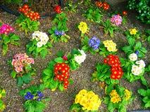 Flores de la floración Imagen de archivo libre de regalías