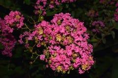 Flores de la fusión del delta foto de archivo