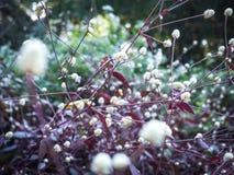 Flores 005 de la hierba Imágenes de archivo libres de regalías