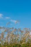 Flores de la hierba imagen de archivo libre de regalías
