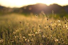 Flores de la hierba imagen de archivo