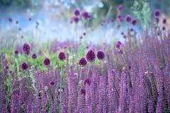 Flores de la hierba de la cebolleta en fondo hermoso de la falta de definición fotografía de archivo