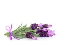 Flores de la hierba de la lavanda Imágenes de archivo libres de regalías