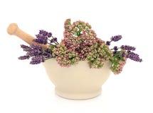 Flores de la hierba de la lavanda y de la valeriana Foto de archivo libre de regalías