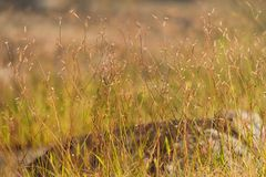 Flores de la hierba en el campo Fotos de archivo libres de regalías