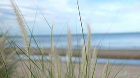 Flores de la hierba en las orillas del mar almacen de metraje de vídeo
