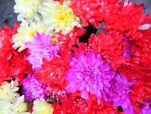 Flores de la HIERBA VERDE Fotos de archivo