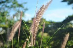 Flores de la hierba y fondo del cielo Fotografía de archivo libre de regalías