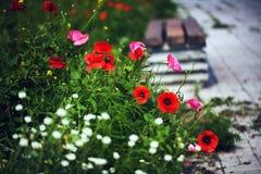 Flores de la hierbabuena en el jardín Fotos de archivo