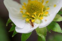 Flores de la hormiga Imágenes de archivo libres de regalías