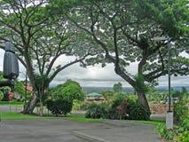 Flores de la isla Imagen de archivo libre de regalías
