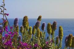 Flores de la isla Madeira Imagen de archivo