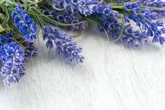 Flores de la lavanda Foto de archivo libre de regalías