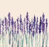 Flores de la lavanda Imagen de archivo