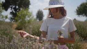 Flores de la lavanda de la cosecha de la mujer almacen de metraje de vídeo