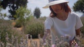 Flores de la lavanda de la cosecha de la mujer metrajes