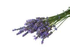 Flores de la lavanda del od del ramo aisladas Foto de archivo libre de regalías