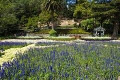 Flores de la lavanda en Wellington Botanic Garden, Nueva Zelanda Foto de archivo libre de regalías