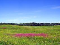 Flores de la lila Imagenes de archivo
