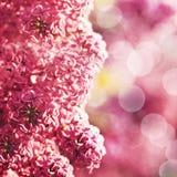 Flores de la lila de la belleza Imágenes de archivo libres de regalías