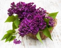 Flores de la lila del verano en cesta fotos de archivo libres de regalías