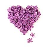 Flores de la lila en la forma del corazón Foto de archivo libre de regalías