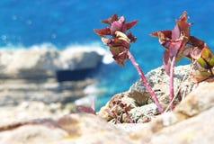Flores de la lucha Imagen de archivo libre de regalías