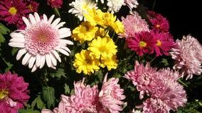 Flores de la mañana Foto de archivo