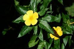 Flores de la mañana en el jardín Fotos de archivo