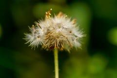Flores 3 de la macro Imagenes de archivo