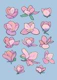 Flores de la magnolia del vector Foto de archivo libre de regalías