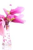 Flores de la magnolia en un florero Imagen de archivo libre de regalías