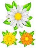Flores de la manzanilla de la margarita. stock de ilustración