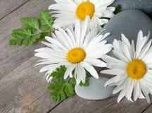 Flores de la manzanilla de la margarita y piedras del mar Foto de archivo