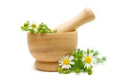 Flores de la manzanilla de la medicina Fotografía de archivo libre de regalías